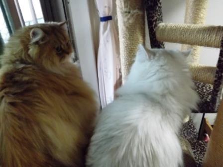 レオンとマリー (1)