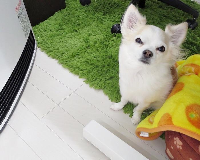 ファンヒーター犬4