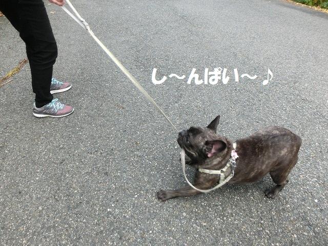 タビコ・移動 033