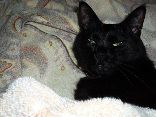 黒猫 フトン 1