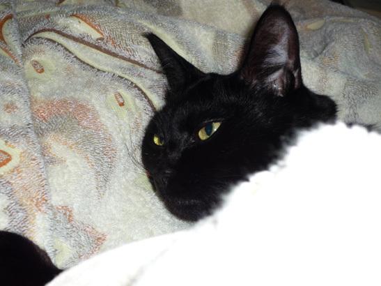 黒猫 フトン 2