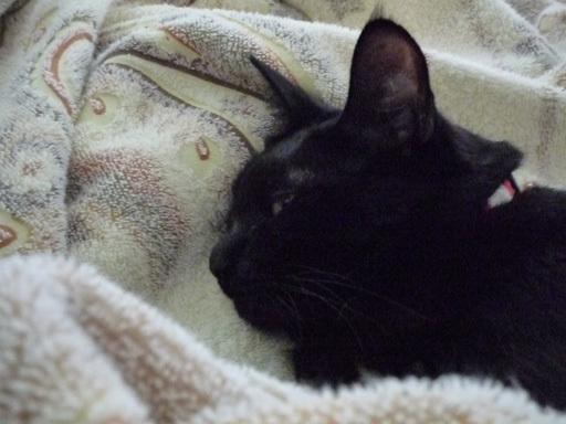 黒猫 フトン 3