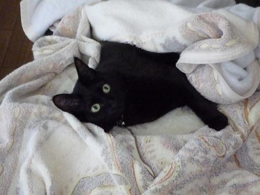 黒猫 フトン 4