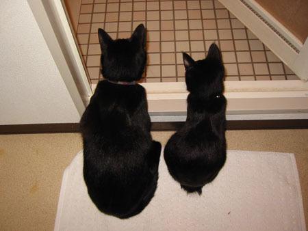 黒猫ならぶ 風呂場のぞき