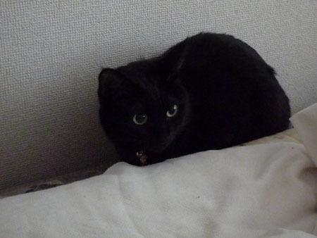 壁際の黒猫.