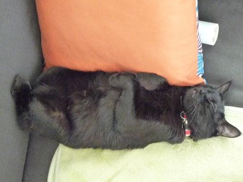 黒猫 爆睡中