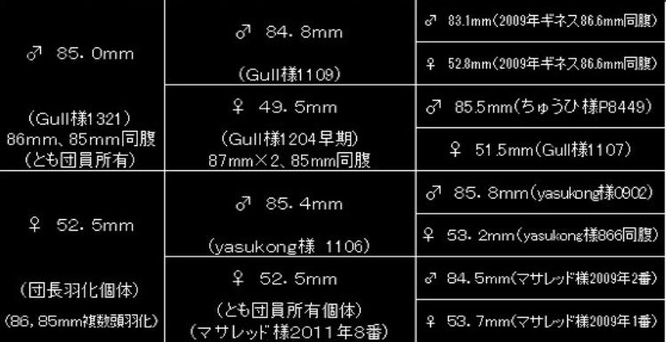 17-能勢YG♂-1-804-Bdan血統図
