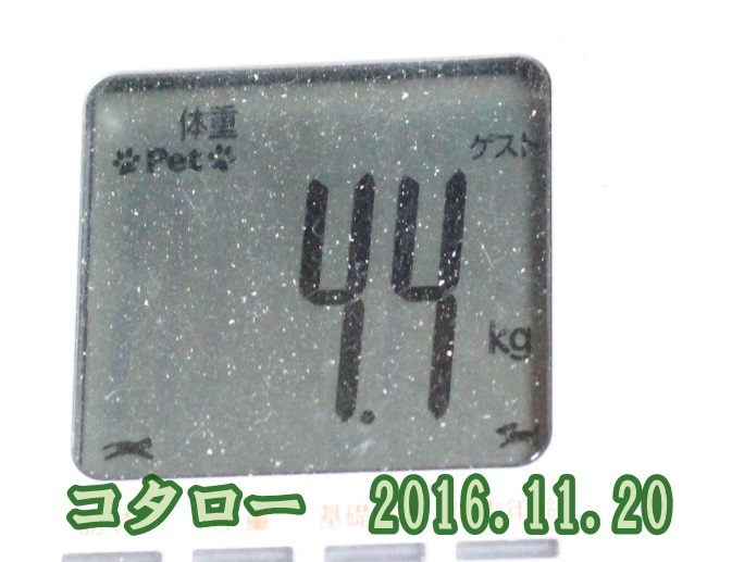 2016 11 20_4812-1