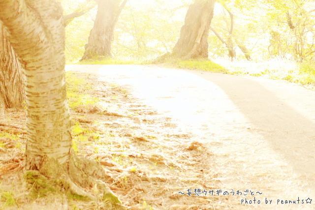 秋ぼんぼり