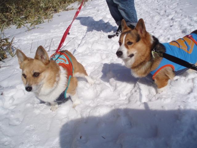 雪遊びでも仲良し