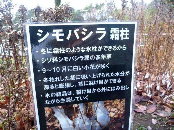 Shimo_1.jpg