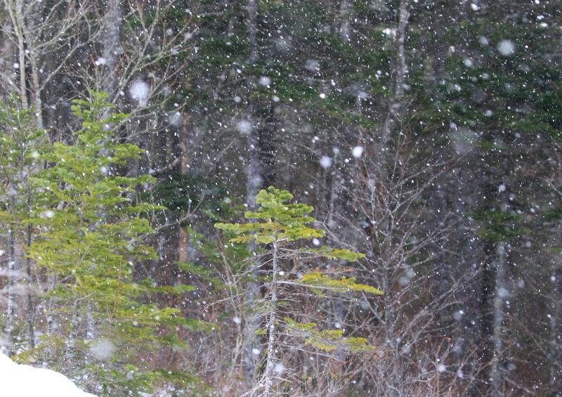 186 深々と降る雪 0001