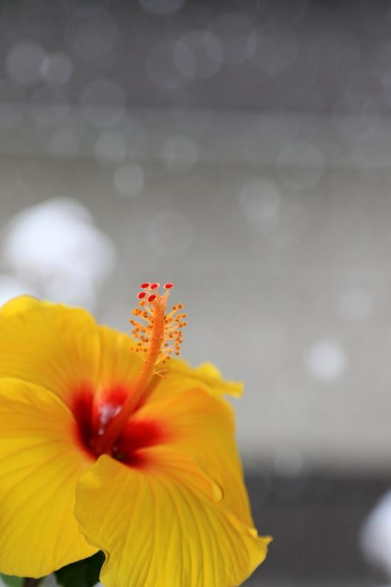 041 窓辺の花0001