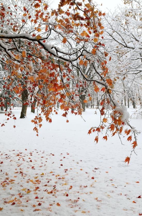 101 雪と紅葉0001
