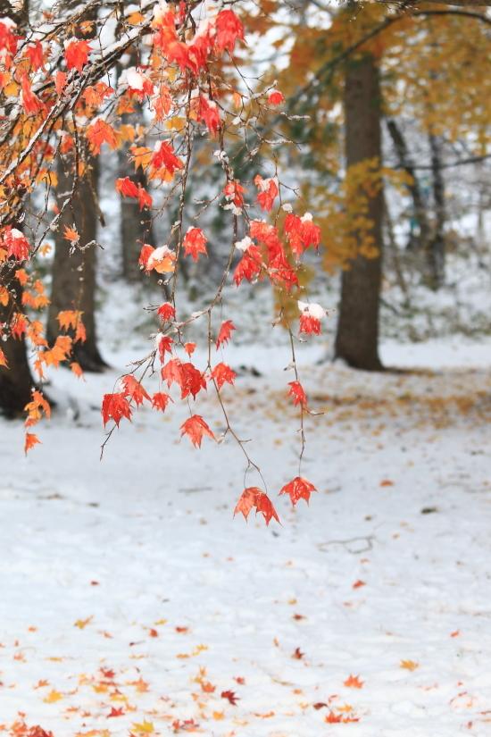 150 雪と紅葉0001