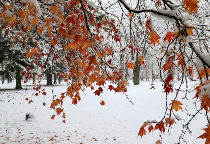118 雪と紅葉0001