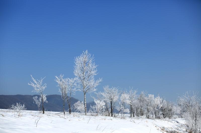 279 青空と霧氷0001