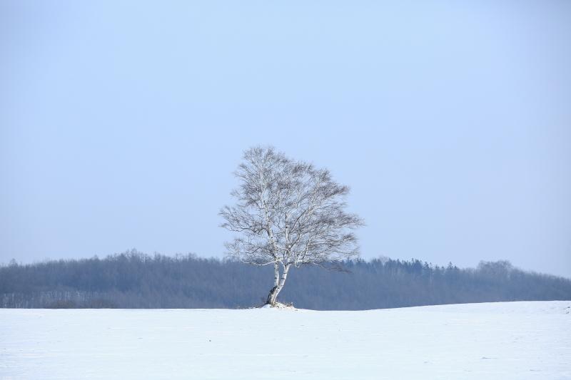 085 一本の木0001