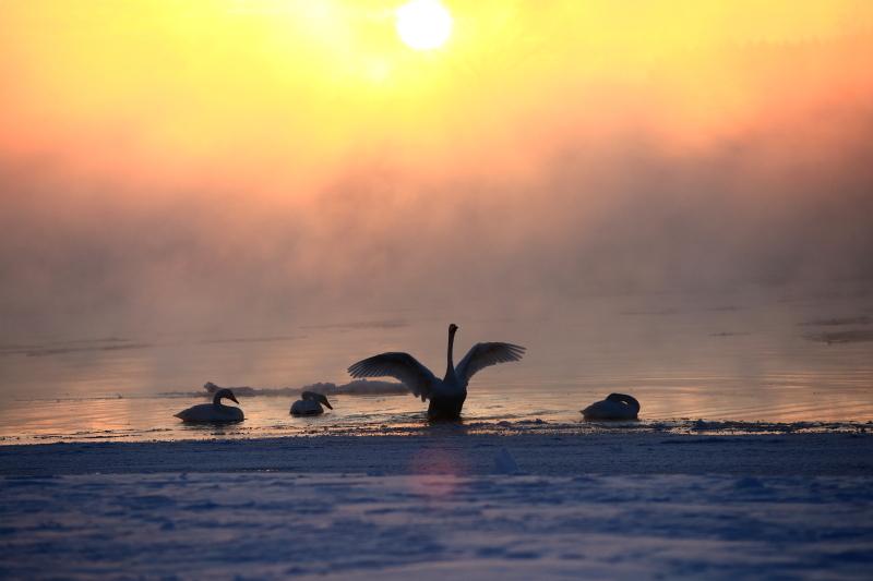 123a 毛嵐の中の白鳥0001
