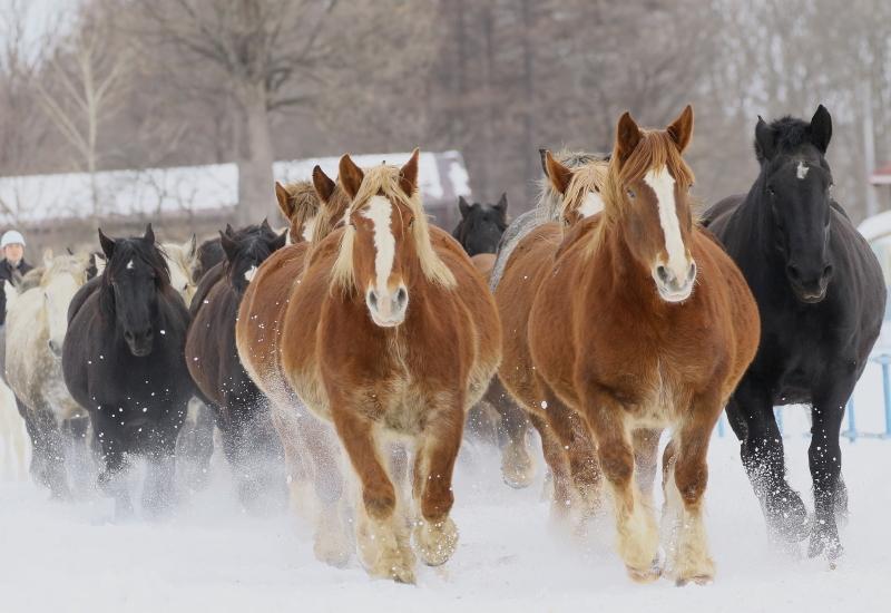 124 馬追い0001