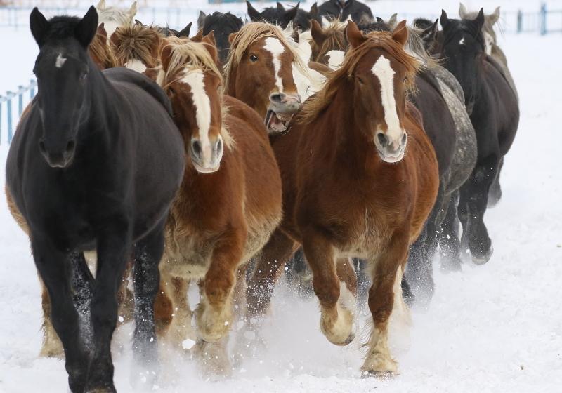 096 馬追い0001