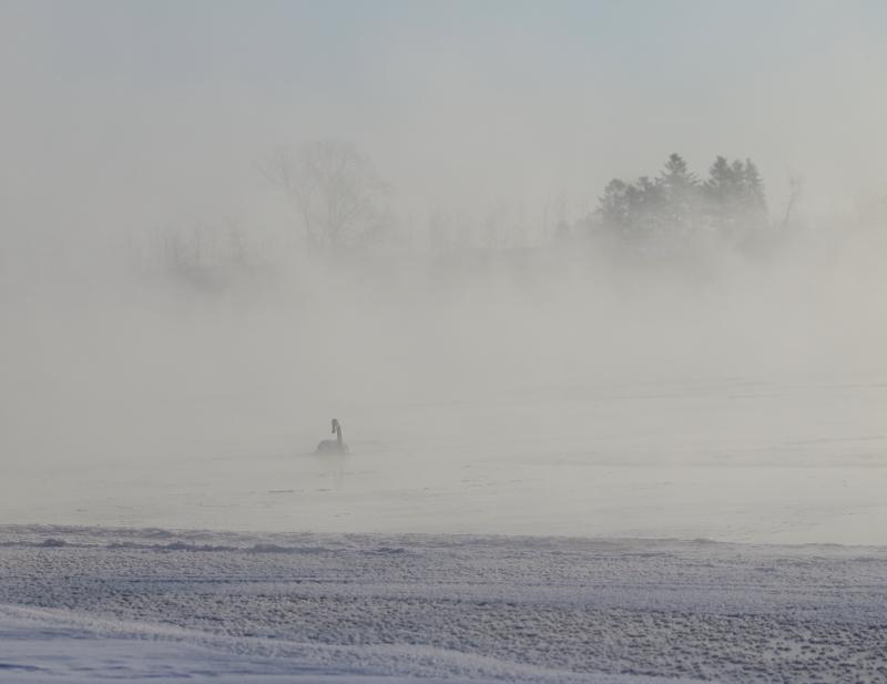 150 霧氷とフロストフラワーの0001