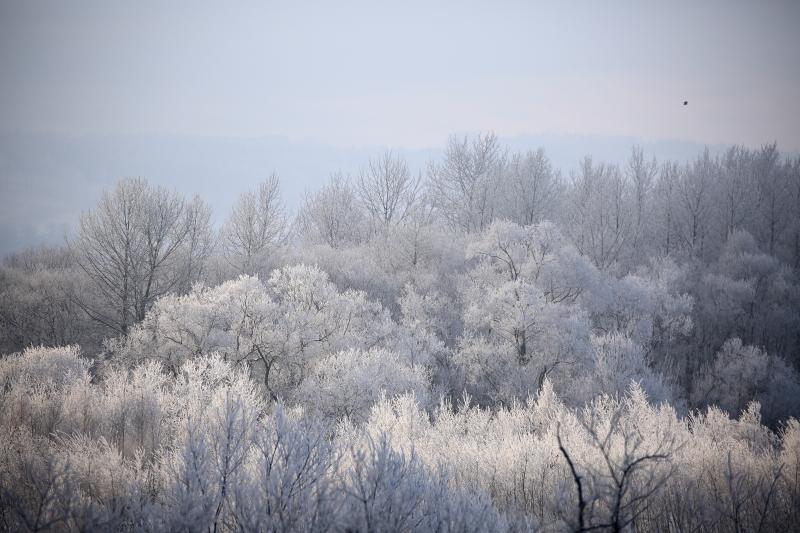 370 霧氷0001