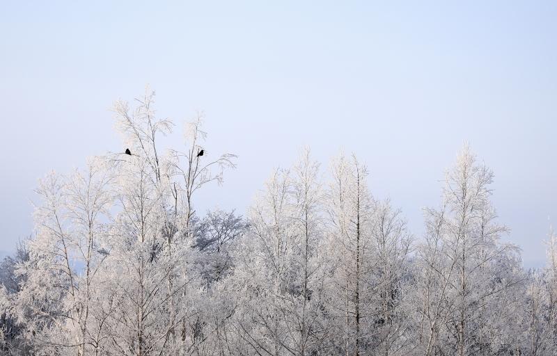 375 霧氷0001