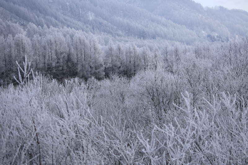 396 霧氷0001