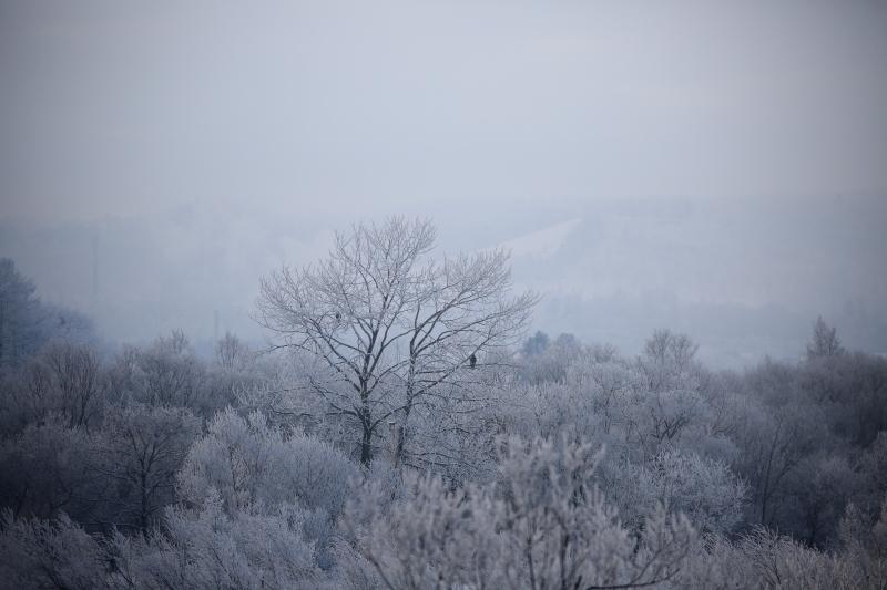 374 霧氷0001