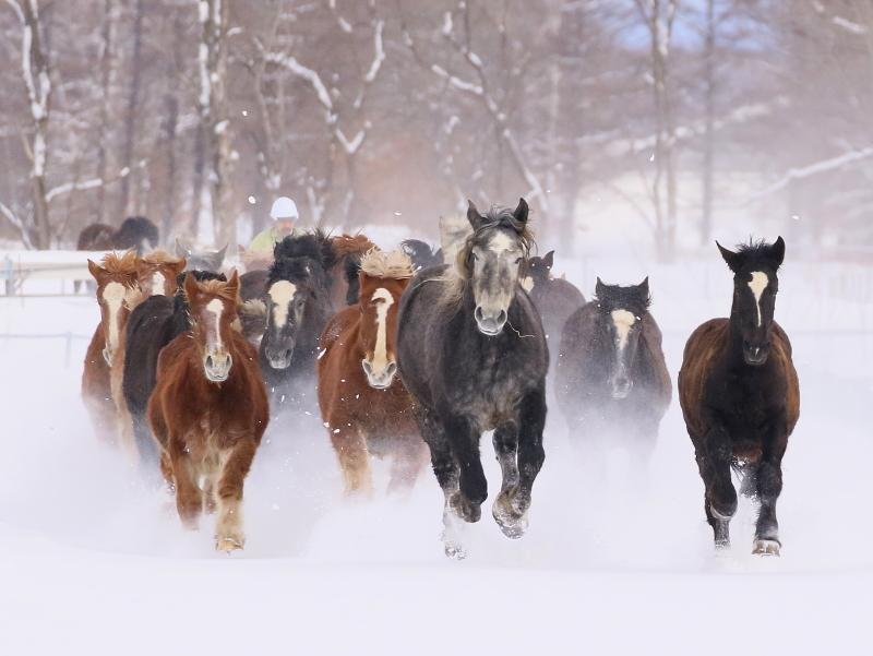 099 馬追い0001