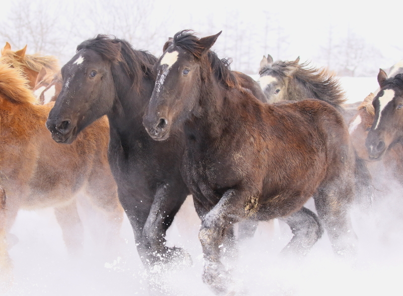 186 馬追い0001