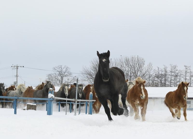 973 馬追い0001