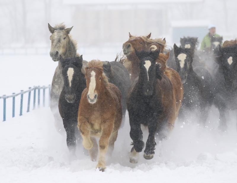 214 馬追い0001
