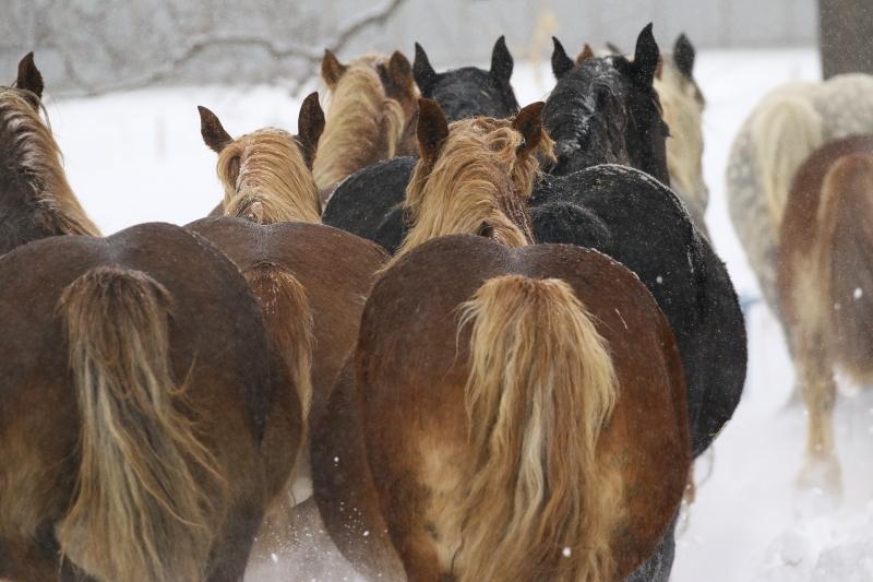 437 馬追い0001