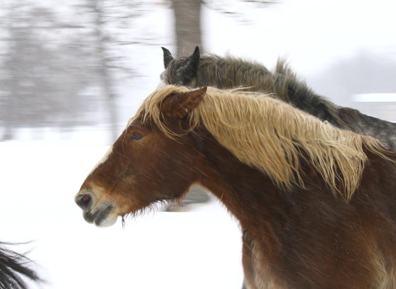 041 馬追い運動0001
