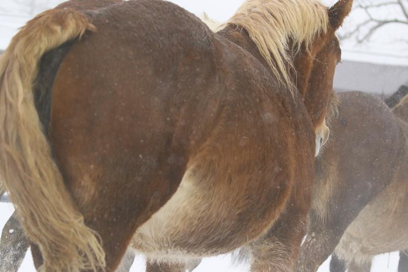 130 馬追い運動0001