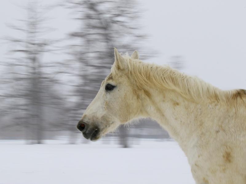 242馬追い運動0001