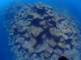 1伊豆海洋公園 (8)