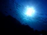 5伊豆海洋公園 (2)
