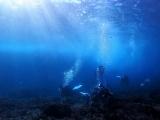 160115伊豆海洋公園ダイビング (20)