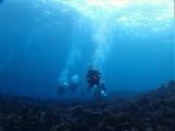 160115伊豆海洋公園ダイビング (49)