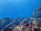 160115伊豆海洋公園ダイビング (30)