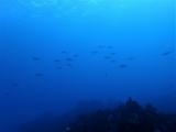 160115伊豆海洋公園ダイビング (36)