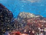 160115伊豆海洋公園ダイビング (31)