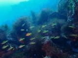 160115伊豆海洋公園ダイビング (38)