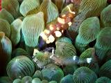 160115伊豆海洋公園ダイビング (40)