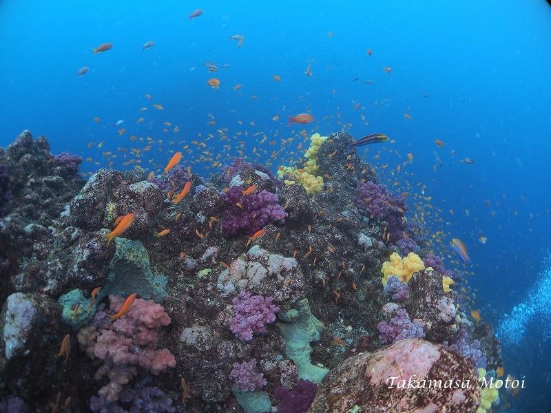 4白根サンゴ