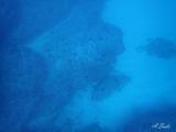 7勝浦ダイビングイソムラボート (1)