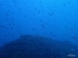 7勝浦ダイビングイソムラボート (3)